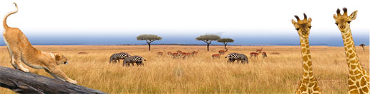 Классический символ флоры и фауны Восточной Африки.