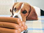 О собаках-попрошайках
