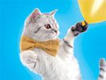 «Свободный полет» домашних животных