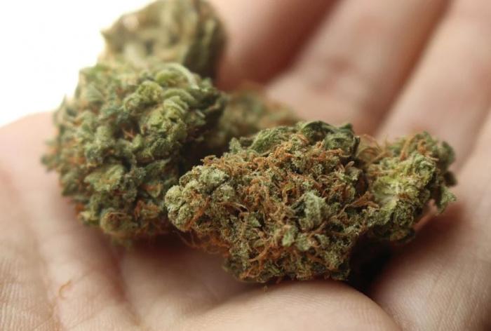 марихуана на ладони