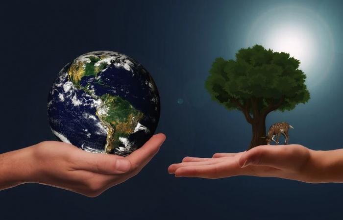 рука с земным шаром и рука с деревом