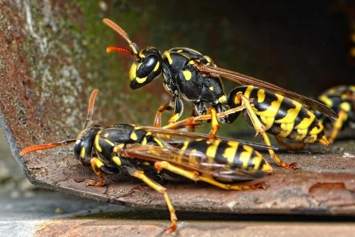 две осы на поверхности
